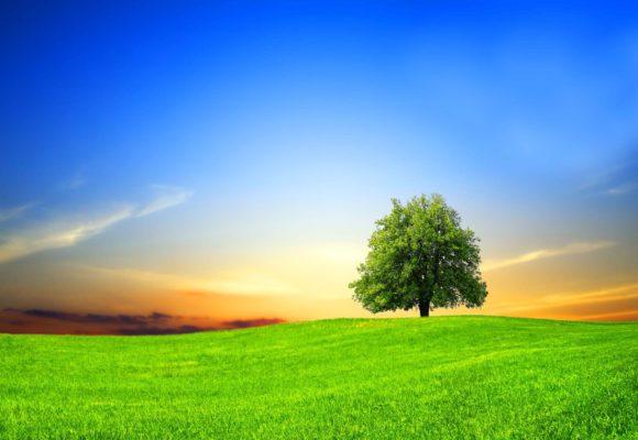 Ioga i natura: Fer o ser